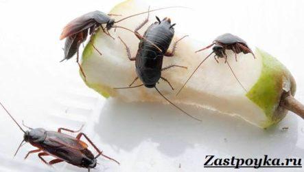 Как избавиться от тараканов дома?